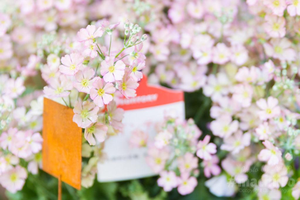花舎 写真 奄美名店ドットコム 8